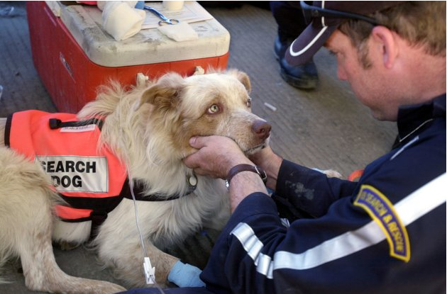 world-trade-center-wtc-9-11-search-resuce-dogs-32[1]